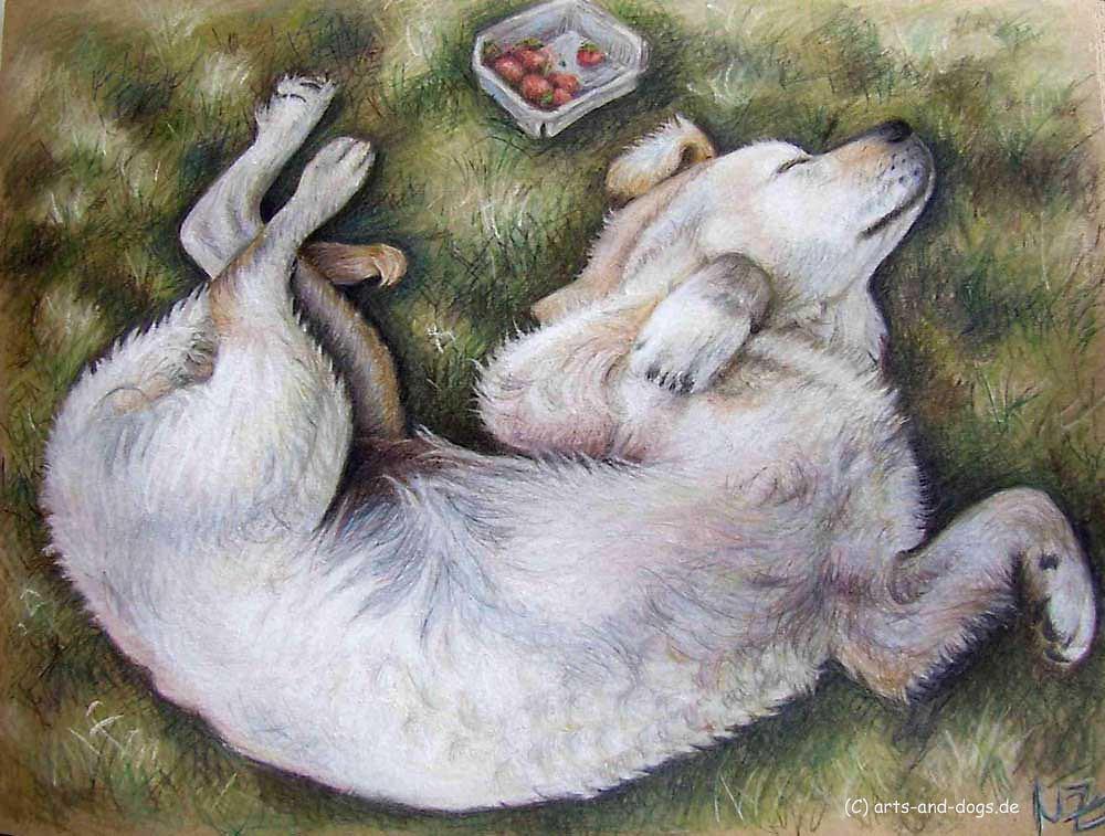 Golden Retriever Welpe - Gonden Retriever Puppy