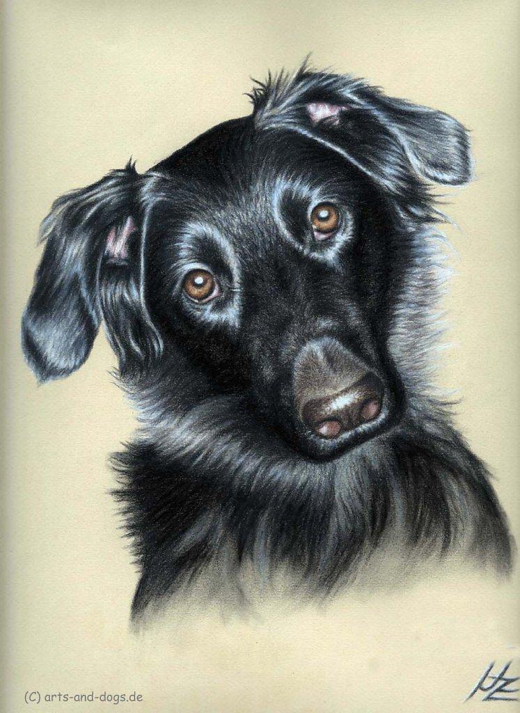 Dogs Eyes II
