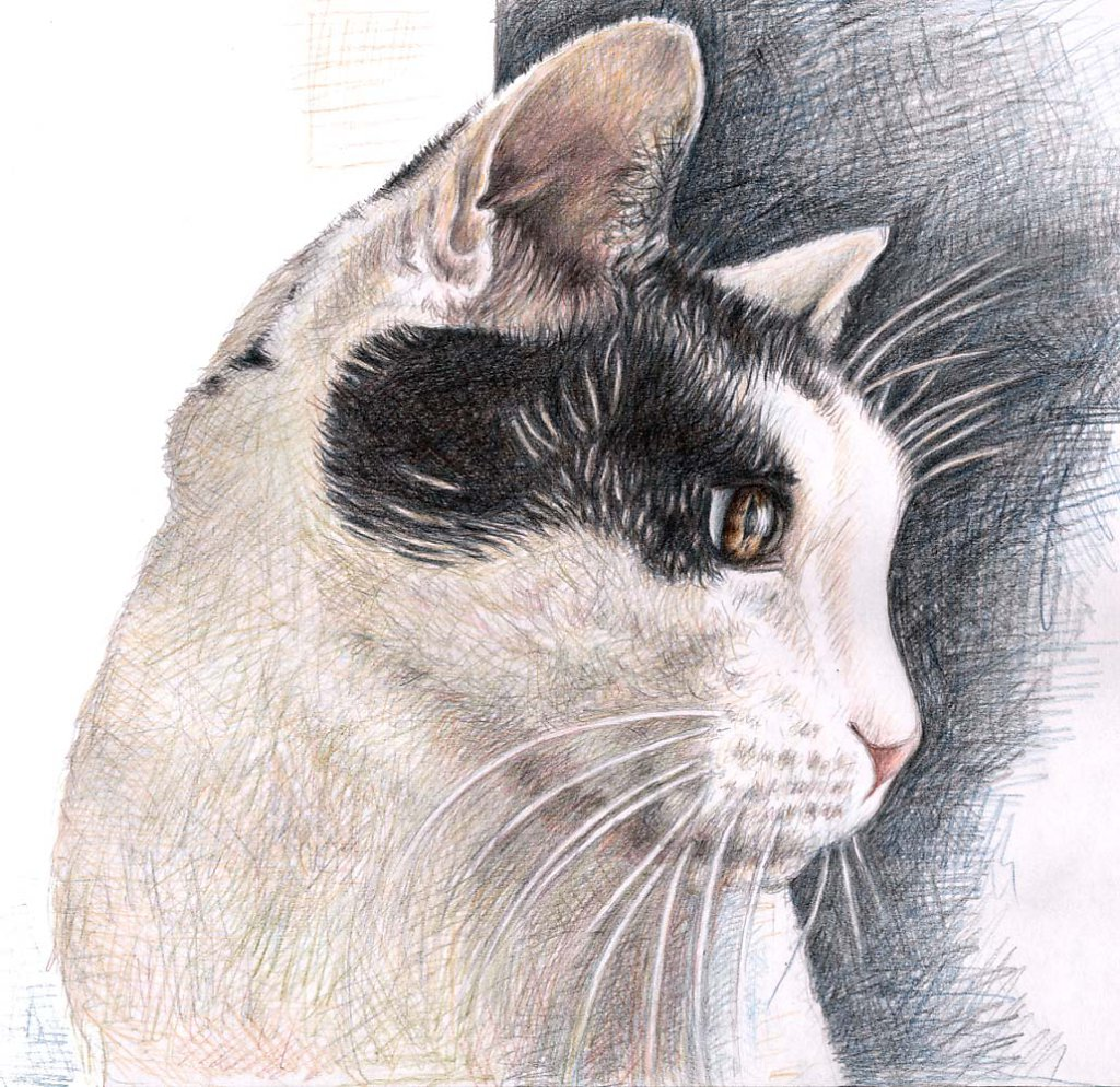 Katzenblick - Cats View