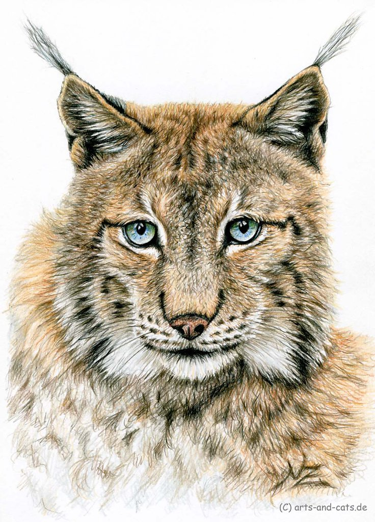 Der Luchs - The Lynx