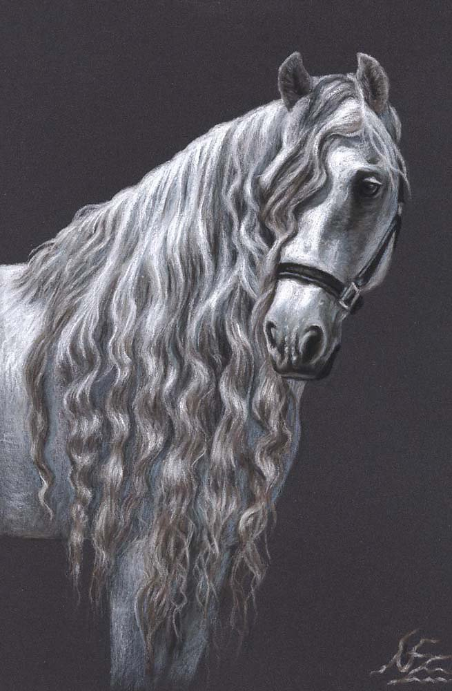 Andalusier - Andalusian Horse