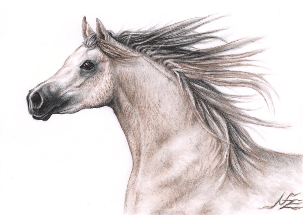 Araber - Arabian Horse