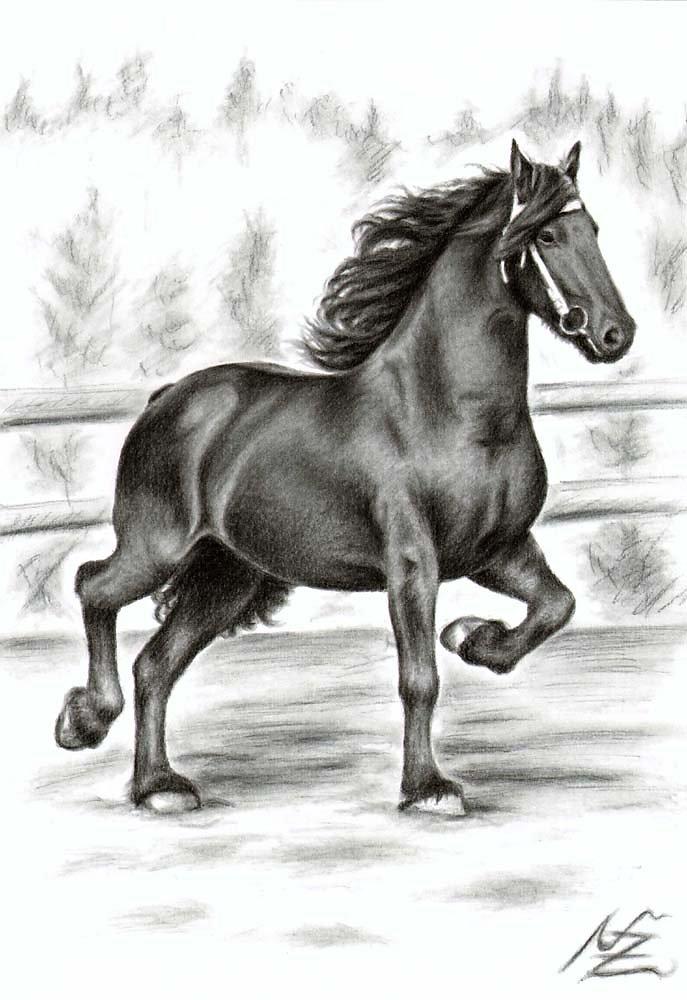 Friesisches Pferd - Friesian Horse