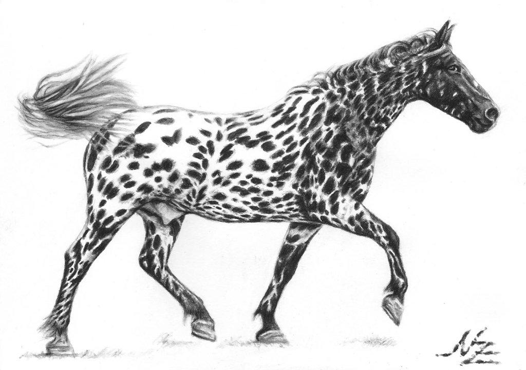 Tigerschecke - Painted Horse