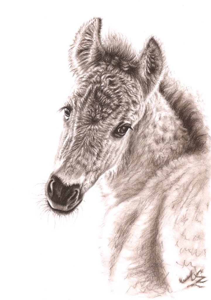 Wildpferd Fohlen - Wild Pony Foal