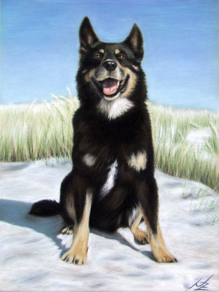 Schäferhund - German Shepherd