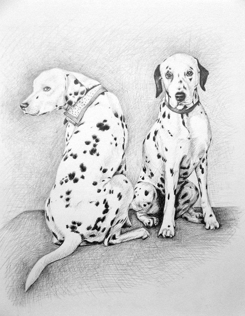 Dalmatiner - Dalmatians