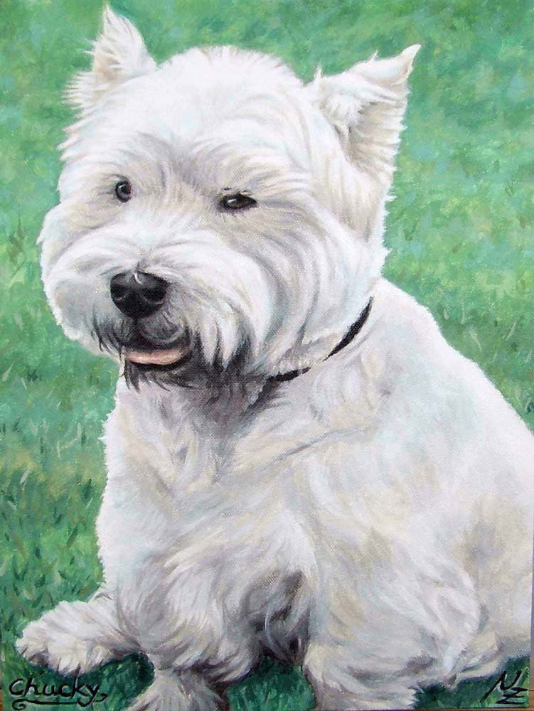 Westi - White WestHighland Terrier