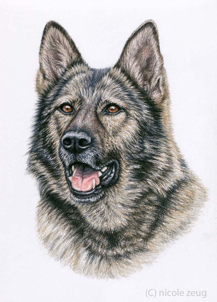 Grauer Schäferhund - Grey German Shepherd