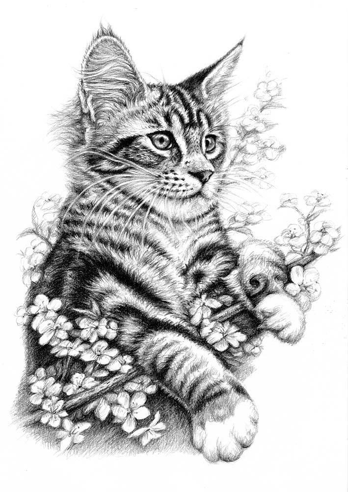 Frühlingskatze - Spring Cat