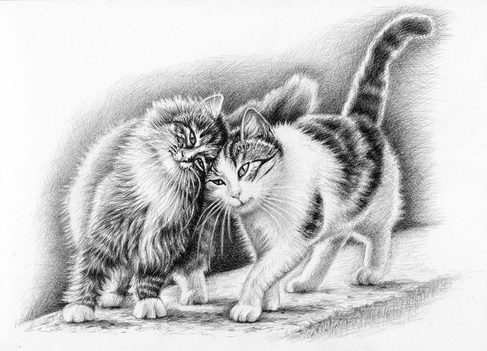 Die Schmusekatzen - Cuddly Cats