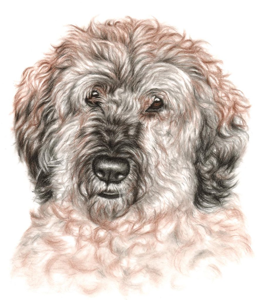 Wuschel - Mop Dog